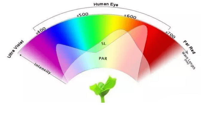 How the Lighting Spectrum Affects Plant Growth | eGrowLight